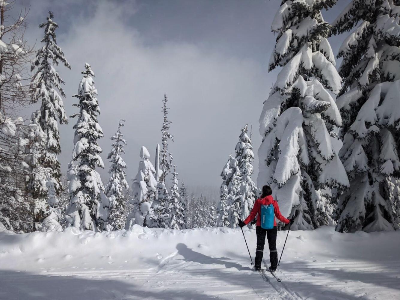 Crosscountry skiing on mount hood near portland oregon
